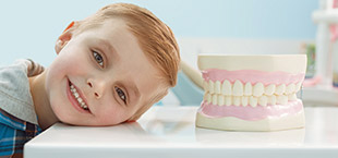 Smiling little boy and tooth model